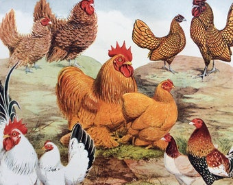 1910 Bantams, Japanese, Frizzles, Buff Pekins, Golden Sebrights, Old English Game Original Antique Matted Lithograph - Poultry - Chicken