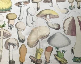1880 Large Original Antique Fungi Lithograph - Mushroom -  Botany - Botanical Art - Wall Decor - Kitchen Decor - Agaric