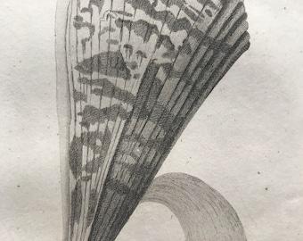 1809 Pinna Rudis Rotundata or Great Sea Pinna Original Antique Engraving - Marine Wildlife - Ocean Decor - Available Matted and Framed