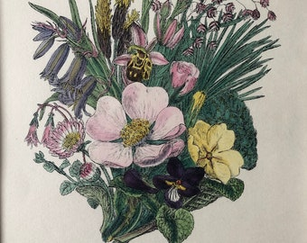 1914 Original Antique Botanical Hand-Coloured Engraving - British Wild Flowers - Mounted and Matted - Botany - Available Framed