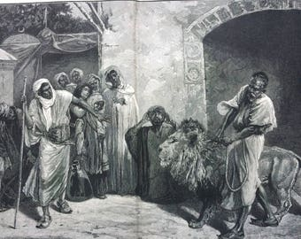 1883 The Marabout (Sacred) Lion, Algiers y E. Pavy Original Antique Engraving, Victorian Decor, Algeria, Animal Art, Decorative Wall Art