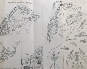1858 Original Antique Engraving - Pterodactylus Crassirostris and Brevirostris - Palaeontology - Fossil - Available Matted and Framed