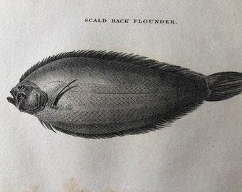 1812 Scaled Back Flounder Original Antique Engraving - Ichthyology - Fish Art - Fishing Cabin Decor - Available Framed