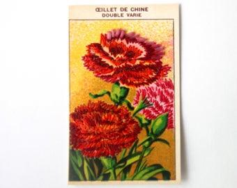 Herbier floral brodé : Oeillet de Chine   Carte vintage de 1920 illustrée de fleurs brodée à la main au fil de soie