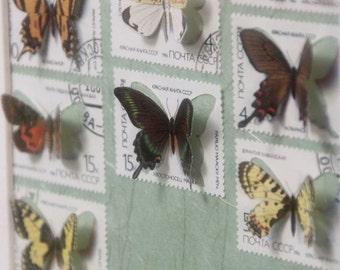 Vitrine de timbres découpés à la main illustrés de papillons, inspirée des boîtes à insectes entomologiques   Monde minuscule #7