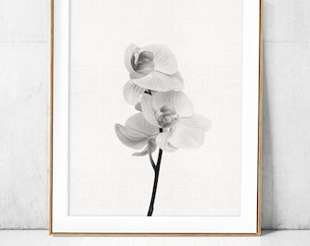Orchid wall art etsy orchid posterblack white flower printprintable art photoflower canvas print large wall decor home decordigital modern minimalist mightylinksfo