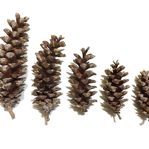 image 0 - Christmas Decorations With Large Pine Cones
