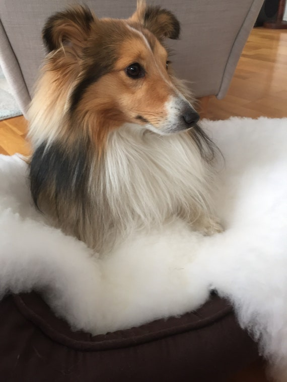 Washable pet blanket from real lambskin sheepskin rug for cat sheep skin wool dog mat shearling pet gift