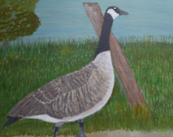 Canadian Goose Walking on A Path