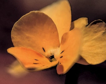 Floral Photography, Yellow Flower, Nature Photograph, Botanical print, Nature Print, Macro flower photography, Macro art, Macro photography