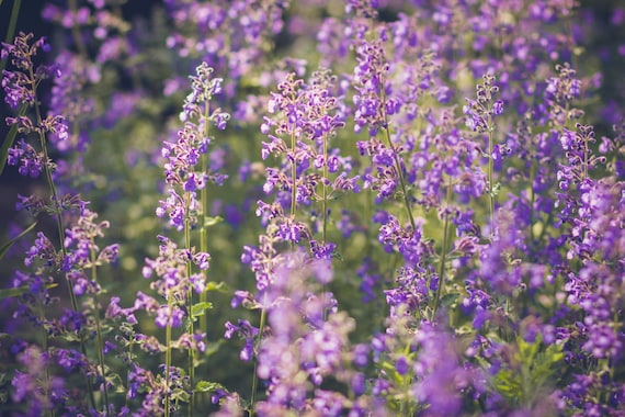 Shabby Chic Shabby Chic Decor Floral Wall Art Purple Decor Etsy