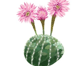 Echinopsis Print