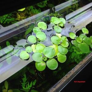 Aquariums & Tank Decor