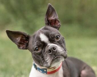 Patriotic Dog Collar – Rustic American Flag Dog Collar – 4th of July Dog Collar – Memorial Day Dog Collar – Labor Day Dog  Collar
