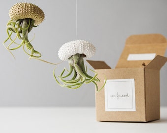 Air Plant Jellyfish Planters, Christmas Gift Friends, Hanging Air Planter, Housewarming Gift, Sea Urchin Air Plant, Wall Hanging Air Plant