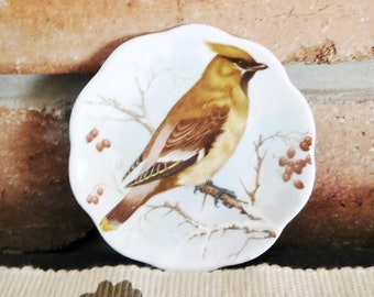 English bone china vintage collectible 7cm miniature plate featuring Cedar Waxwing bird