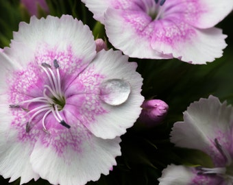Flower with raindrop - digital download