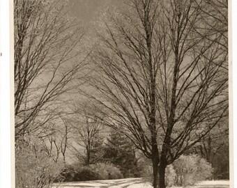 8x10 winter photo