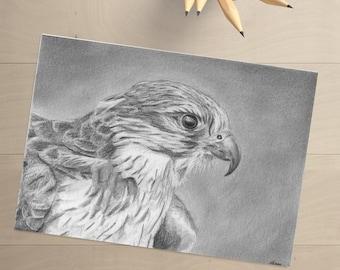 Falcon - Pencil Drawing - Falcon Drawing- Original Drawing - Hawk - Hawk Drawing - Bird Art- Bird Drawing - Original Art - Bird of Prey