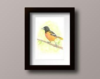 Oriole Painting - Oriole Watercolor - Bird Watercolor - Oriole - Oriole Wall Art - Baltimore Oriole