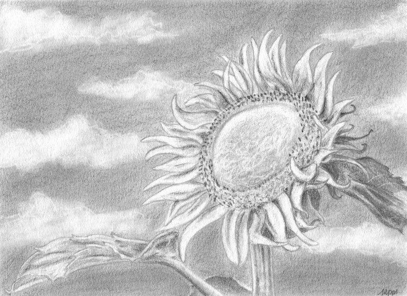 Sunflower Pencil Drawing Sunflower Art Original Drawing Etsy