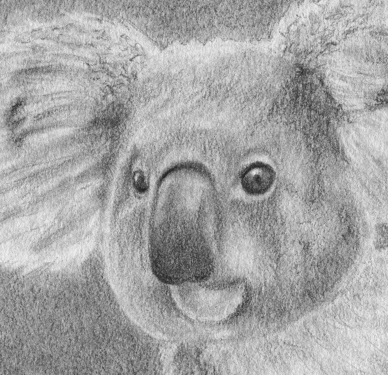 Koala Pencil Drawing Koala Bear Original Drawing Koala Etsy