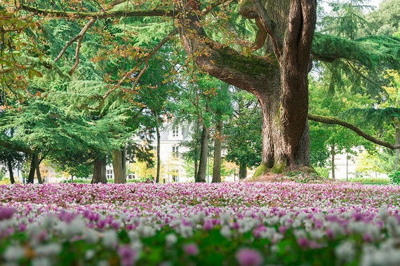 Spring Park Blooming Flowers Pink Forest Flowers Late Spring Etsy