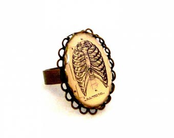 "vintage collection ""Anatomy"" cage ring chest lung"