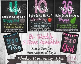 Bi Weekly Pregnancy Sign