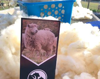 Florida Cracker Wool Washed - Premium Golden Sunshine Fiber #SE2SE