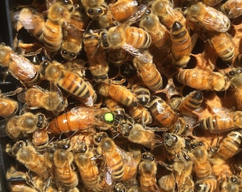 Mated Italian Queen Bee Preorder Ships May 14th 2019