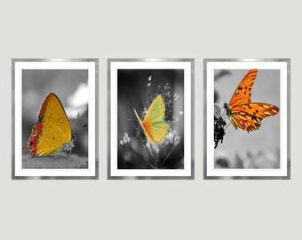 Butterfly Art, Butterflies Print, Set of 3 Prints, Color splash, Nature Photography, Wall Decor, Butterflies Wall Art, Nursery Home Decor