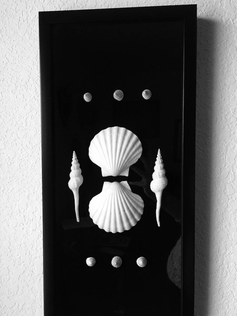 Black white seashells spindle shells shadowbox framed shell art sea shell decor specimen art scallop shell art modern beach art