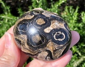 Large Powerful Stromatolite Palm Stone! Building Block for Life! Healing Crystals, Collectable Mineral