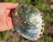 Large Abalone Shell for Smudging and burning Sage! FREE Sage bundle included!