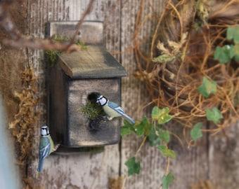 Pair of Blue tits on bird box - 1/12th dollshouse miniature garden bird