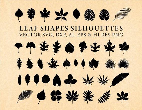 Leaf Svg Leaves Silhouette Svg Leaf Dxf Leaves Dxf Leaf Etsy