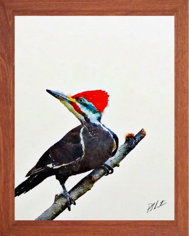 01d08a8cd84c Pájaro carpintero pintura pájaro acuarela de fauna y flora