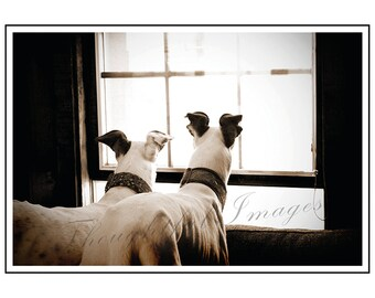 Sepia Greyhound Welcome Blank Greeting Notecard