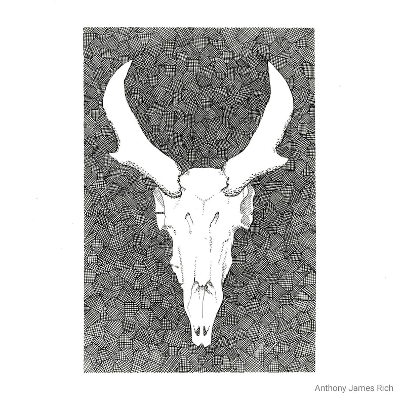 Original Pronghorn Skull Ink Drawing image 0