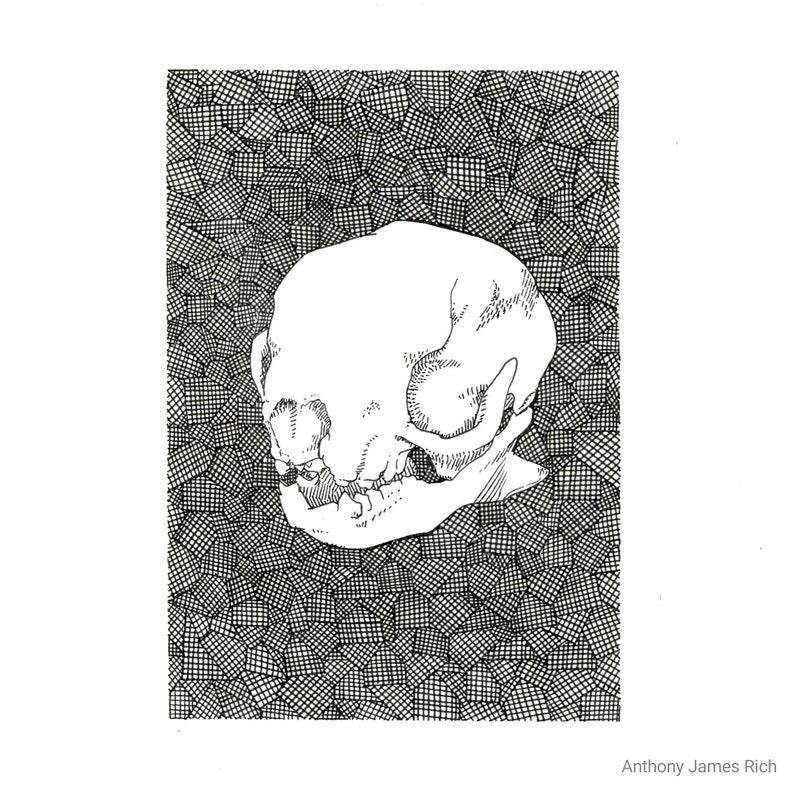 Original Sloth Skull Ink Drawing image 0