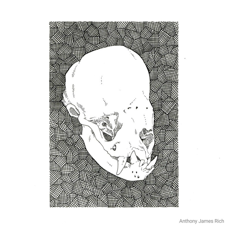 Original Vampire Bat Skull Ink Drawing image 0