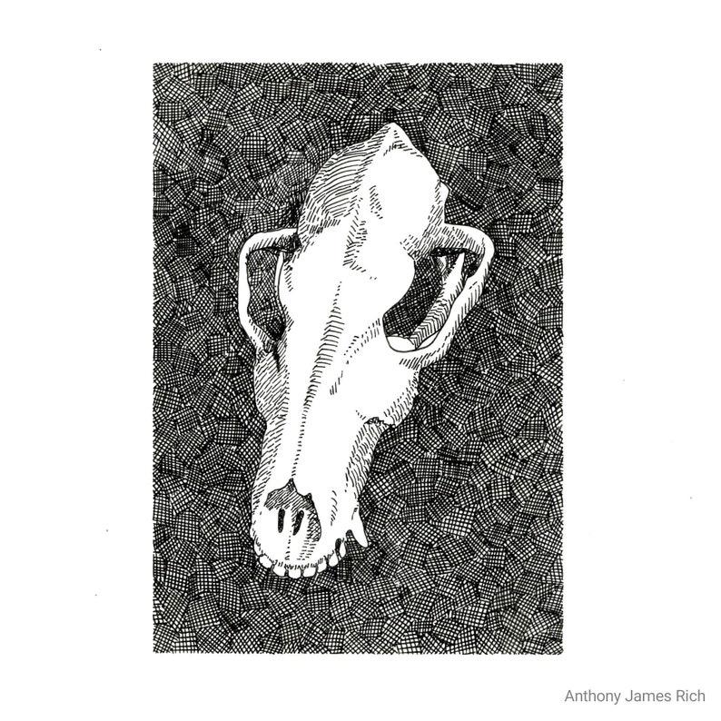 Original Canine Skull Ink Drawing image 0