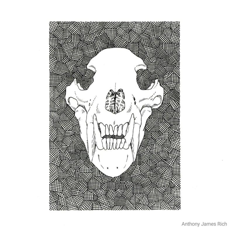 Original Bear Skull Ink Drawing image 0