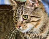 Animal Photography, Kitten, Cat, Green Eyes