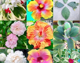4 Month Plant Subscription + FREE Plant Cutting Each Shipment! Live Plant Gift Idea