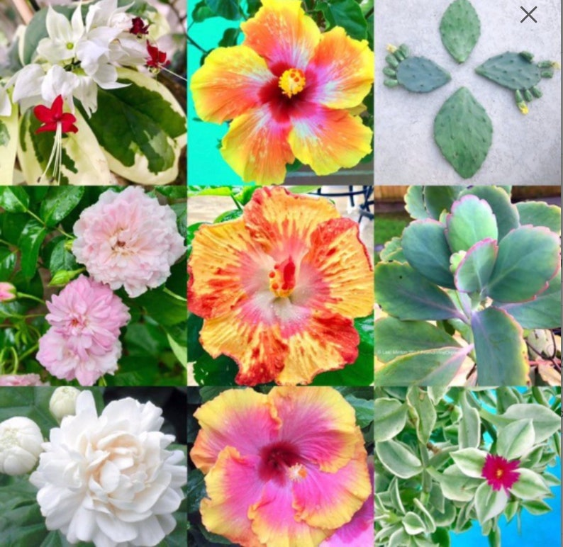 4 12 Month Plant Subscription Free Plant Cutting Each Etsy