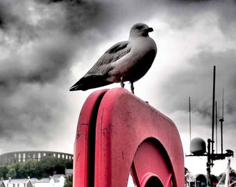 OBAN SEAGULL Black & White Photographic Print in Mount - with high contrast highlights, red, harbour, Scotland, fishing boats, cloudscape