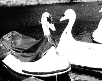 KISSING SWANS Pedalo or Peddle Boats Black and White Photographic Print in Mount - Callendar House, Falkirk, Scotland