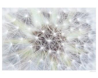 Nature Photography PRINT, Dandelion Details, Wall Art